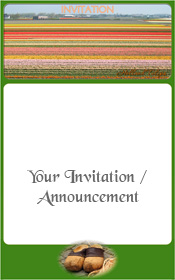 bulb-fields-the-netherlands-invitation-1