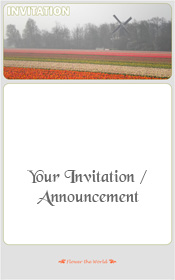 bulbs-fields-the-netherlands-invitation-2