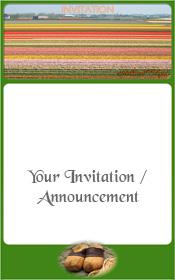 bulb-fields-the-netherlands-invitation-1