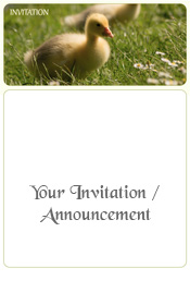 spring-duckling-in-the-grass-invitation