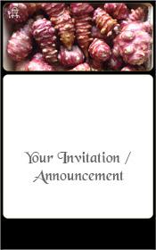 permaculture-jerusalem-artichoke-helianthus-tuberosus-invitation