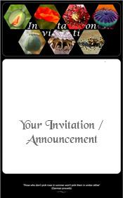 papaver-poppy-summer-invitation